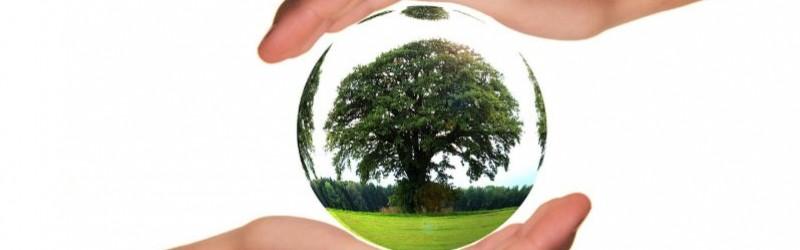 Perché scegliere prodotti monouso biodegradabili e compostabili?